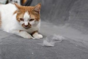 HVAC System Cat Shedding Godfrey Illinois